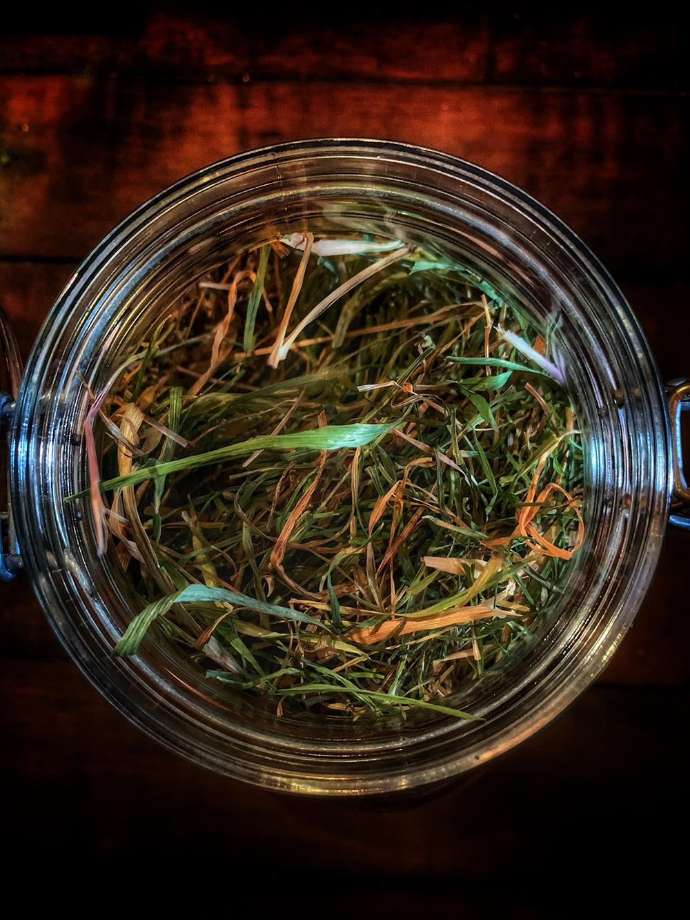 Sweetgrass witchcraft