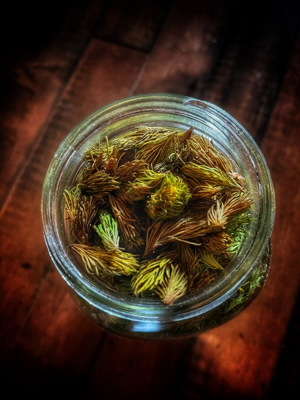 Spruce Tips Witchcraft