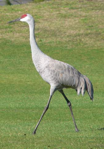 crane information about the