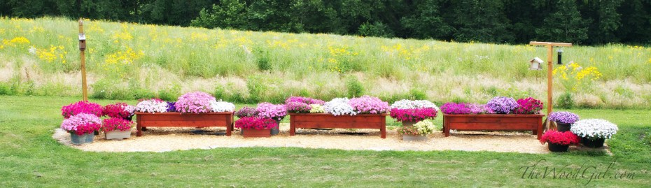 Wide Shot of Planters