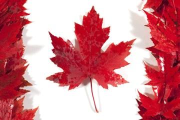 CANADA-FLAG-leaf-thewordisbond