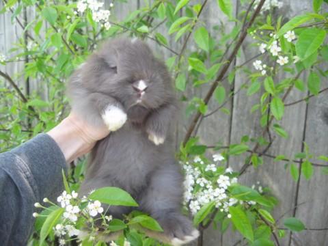 Let's get fluffy!