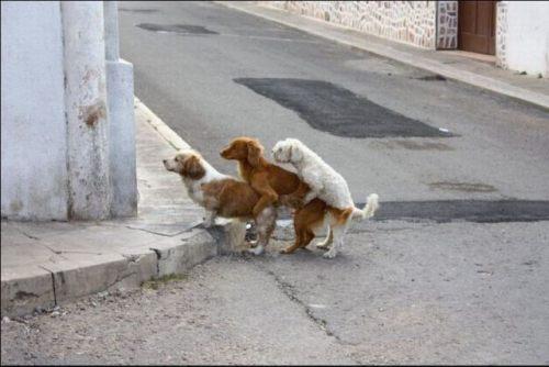 Animals are fun!