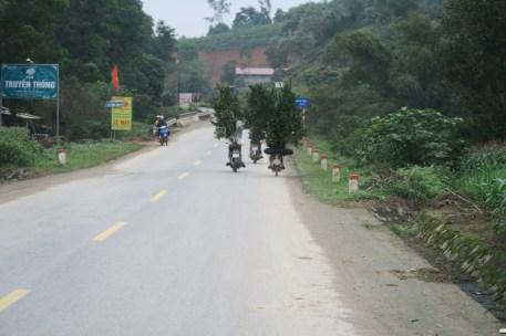 Auf einem Moped kann man alles transportieren!