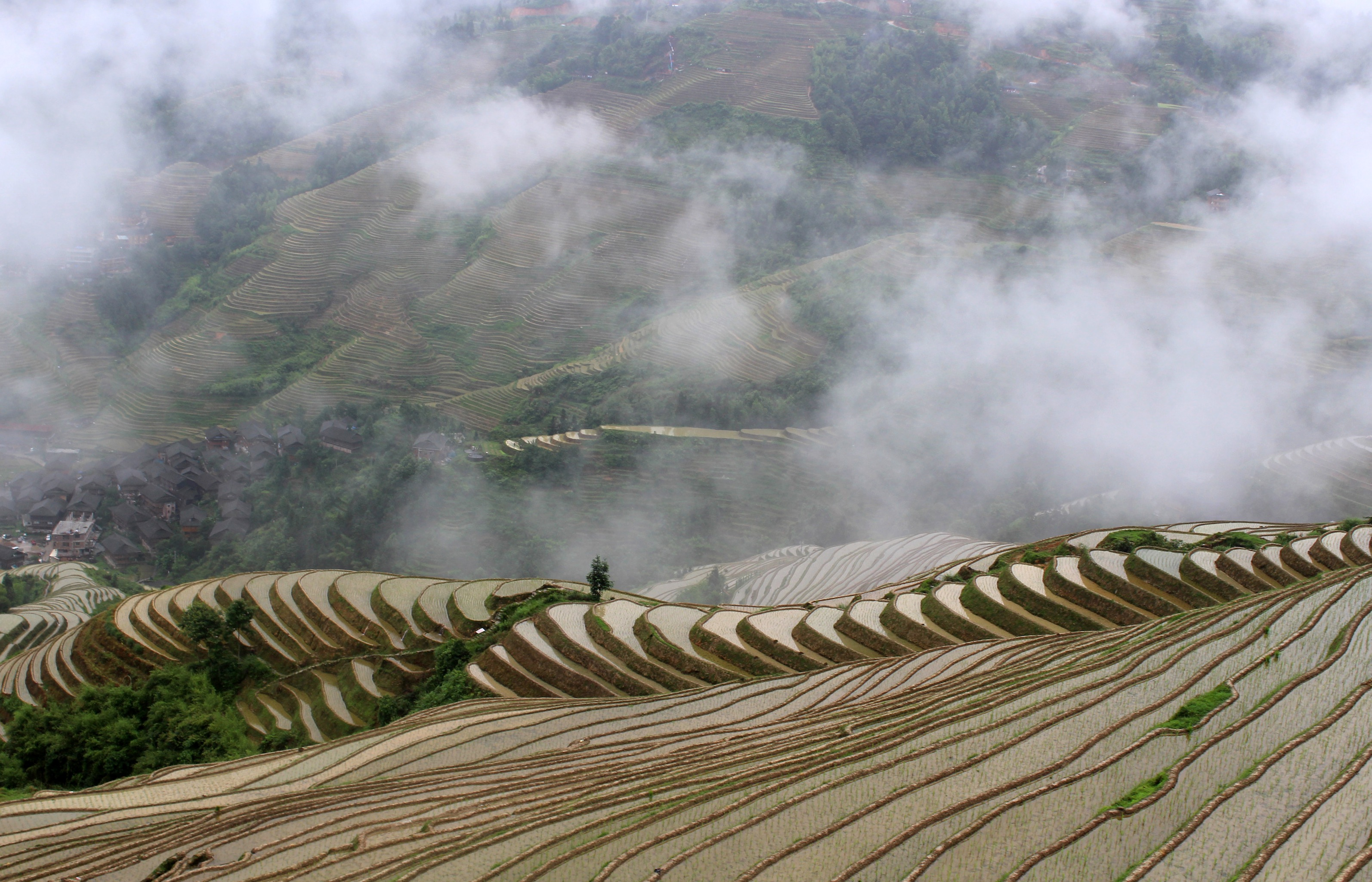 longji-rice-terrace-18
