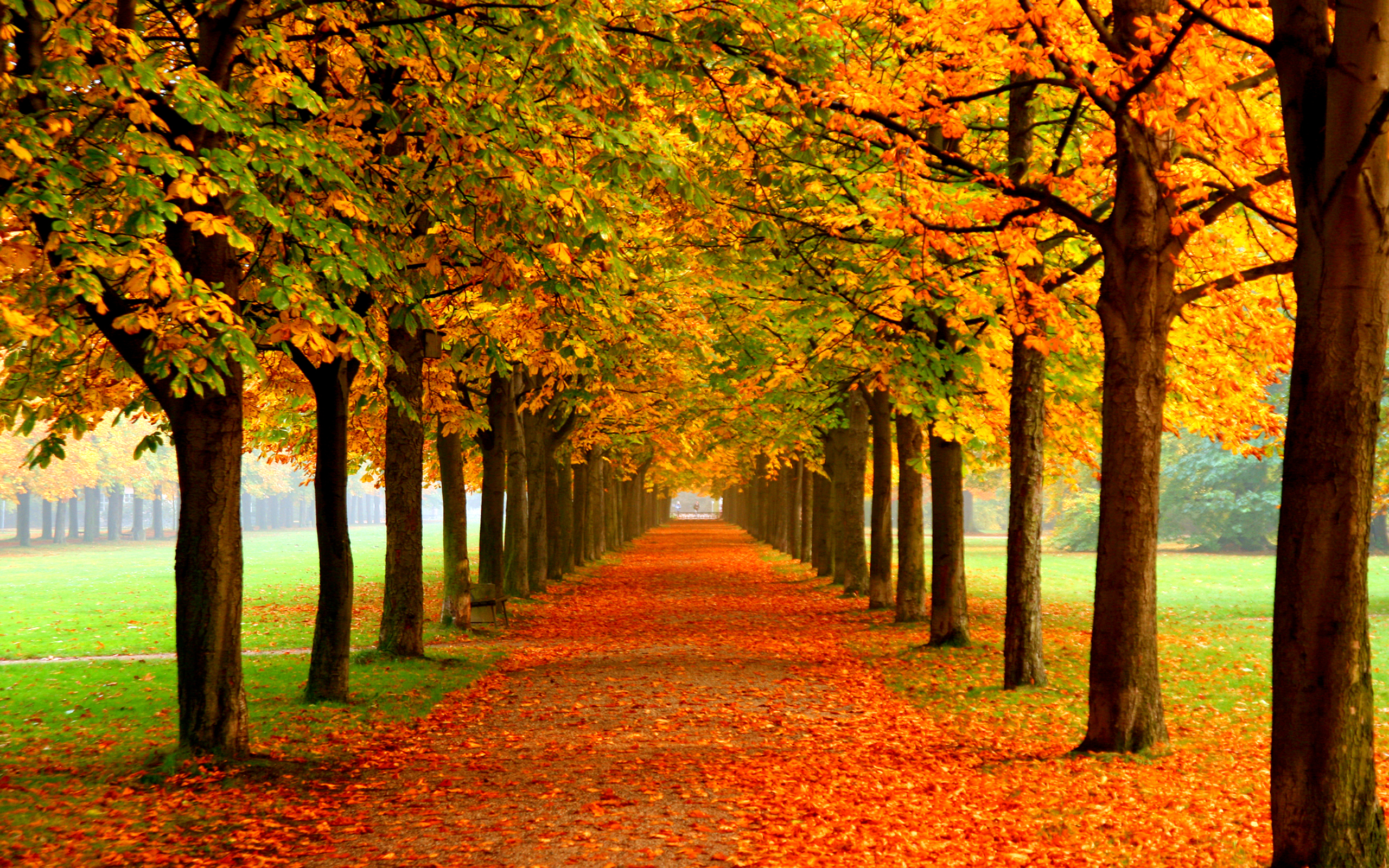 Cute Fall Computer Wallpapers 35 Best Free Wallpaper To Download The Wow Style