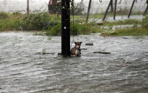 Pets and Harvey