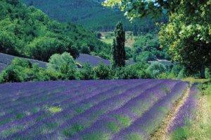 Travel Writing in Montalcino