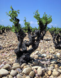 Cobblestones deposited by Rhône River make for excellent soil for wine grapes, a subject we'll explore in the travel, food and wine writing class.