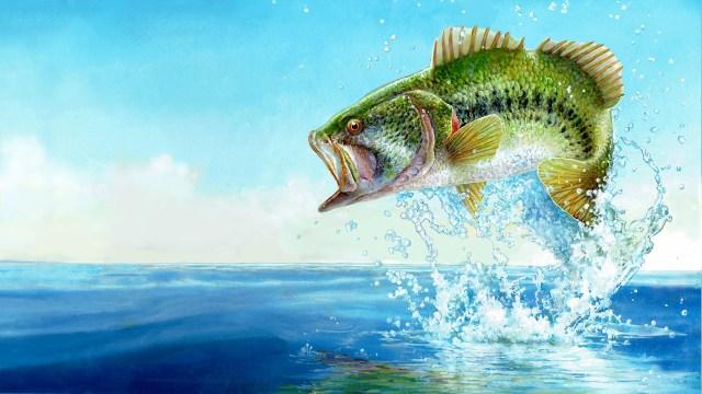 fishing sim world bass pro edition xbox
