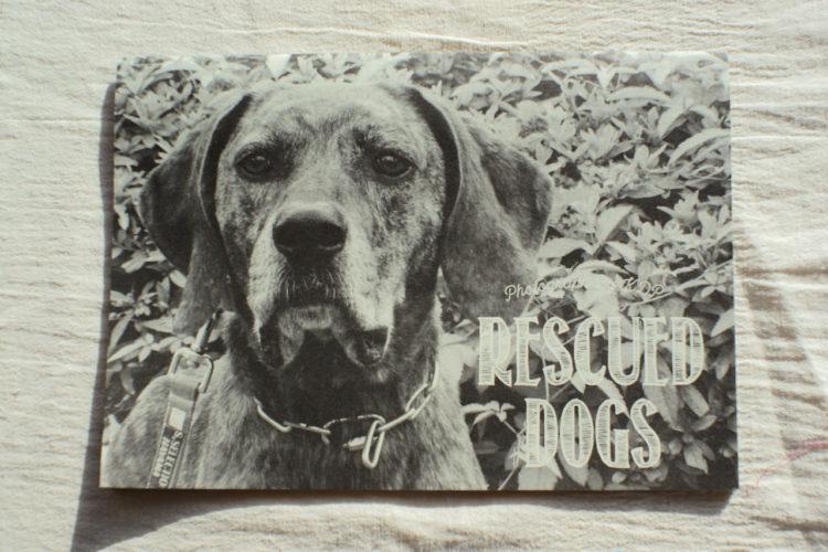 KDPカレンダー 保護犬