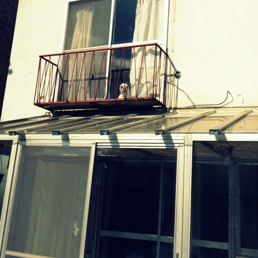 2階のマッシュ
