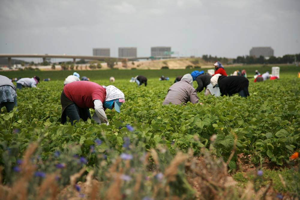 Canada Hiring Seasonal Mexican Agricultural Workers – The Baja Post