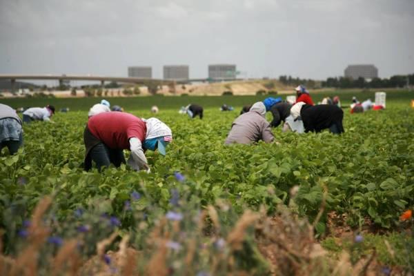 Seasonal migrant workers in Canada (Photo: Google)