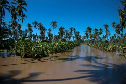 Flooded and destroyed banana plantations surround the village of Rebalse (timesunion.com)