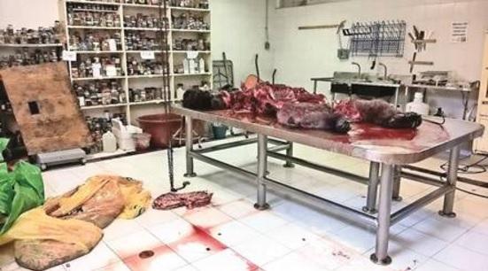 the death of bantú