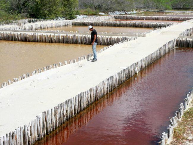 """Celestún. """"Charcas salineras""""; Salt Ponds Photo: El Diario de Yucatán"""