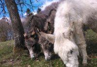 New Donkeys