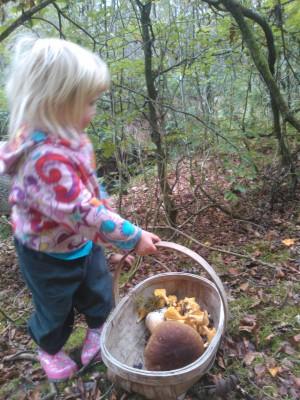 wren foraging