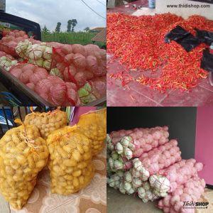 supplier dan pemasok sayuran thidishop