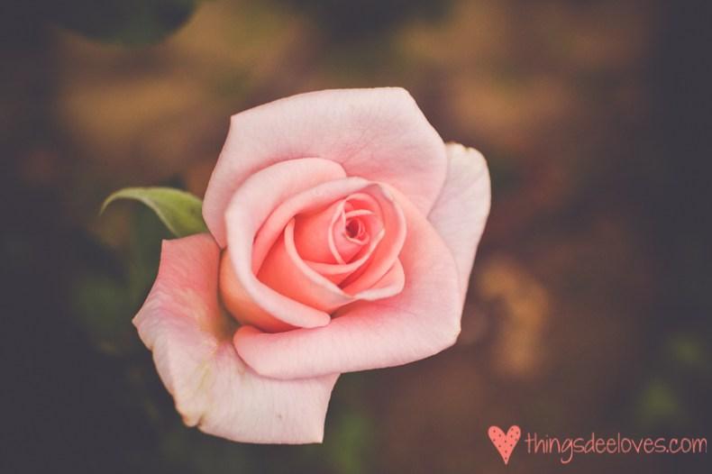 chart farm roses-2