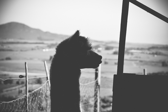 alpaca loom-8