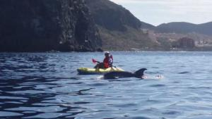Whale and Dolphin watching in Tenerife