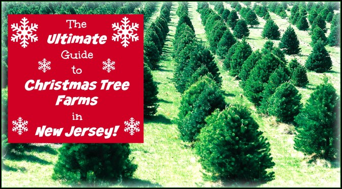 4ec0a5cc277 New Jersey is home to MANY beautiful choose and cut Christmas tree farms!  Find one
