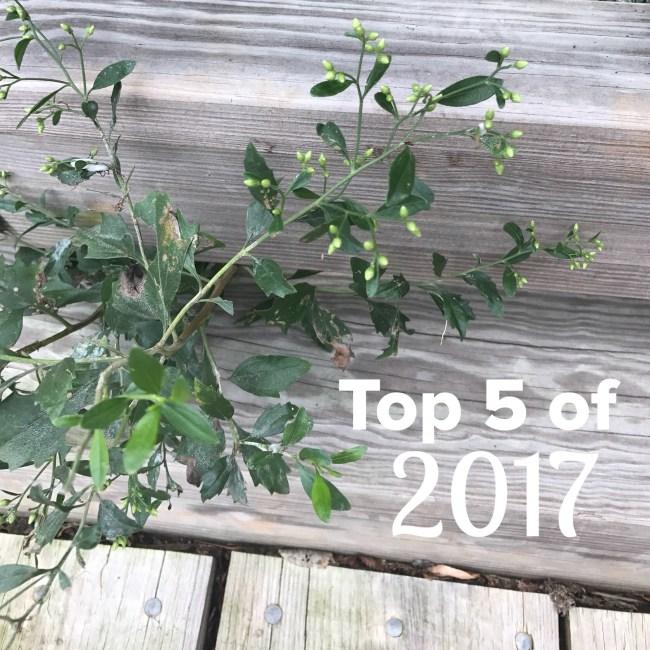 top 5 of 2017