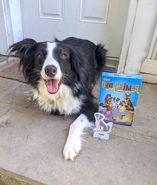 Cider the dog angelically posing with Cider from Dog Crimes.