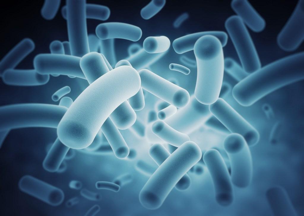 Gut microbes body weight