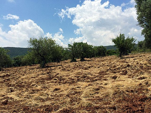 Puglia is very dry during the summer months.