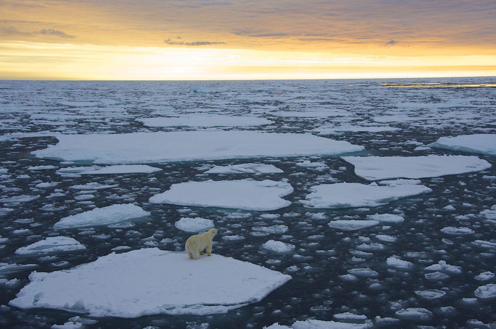 Polar Bear on the ice in the Polar Regions.