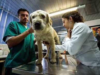 Arthur at a check-up before the flight to Sweden. Arthur the dog in ARW 2014. Photo by Krister Göransson / Peak Performance