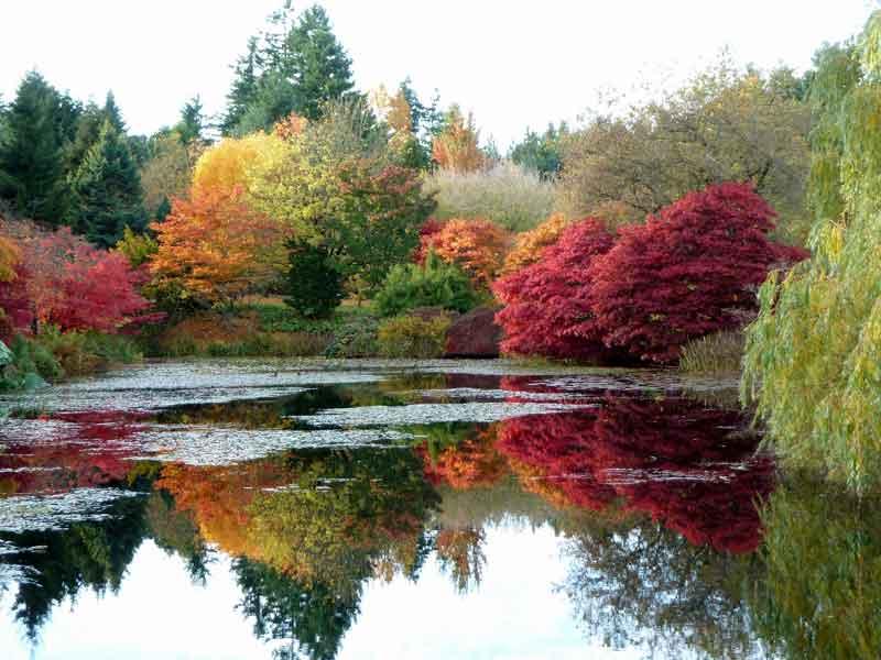 Vandusen Botanical Gardens in Vancouver during autumn.