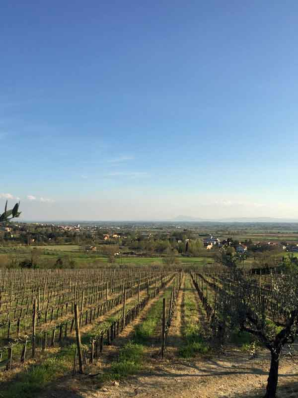 The Baracchi vineyard at Il Falconiere in Cortona, Tuscany.