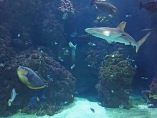 Shark at Institute Oceanographique