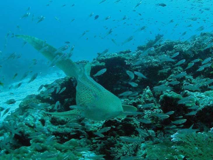 Shark Point outside Phuket, Thailand.