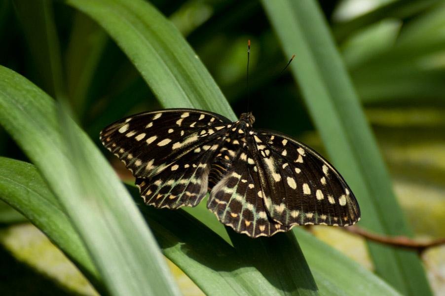 parco di pinocchio e giardino garzoni butterfly house