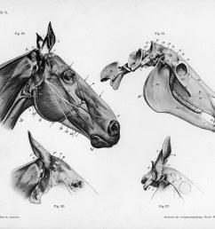 diagram of horse color [ 1500 x 1170 Pixel ]