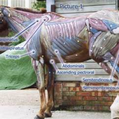 Diagram Of Human Ear With Labelling Door Entry Wiring Diagrams Horse Anatomy Pictures-think Like A Horse-rick Gore Horsemanship