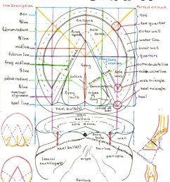 horse gi tract diagram [ 800 x 1034 Pixel ]