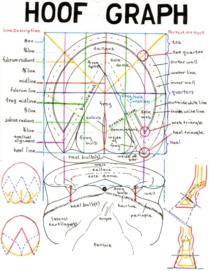 medium resolution of horse gi tract diagram