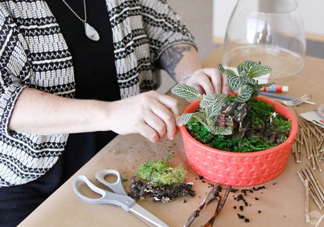 Arranging moss around a cabin scene in a DIY Father's Day terrarium.