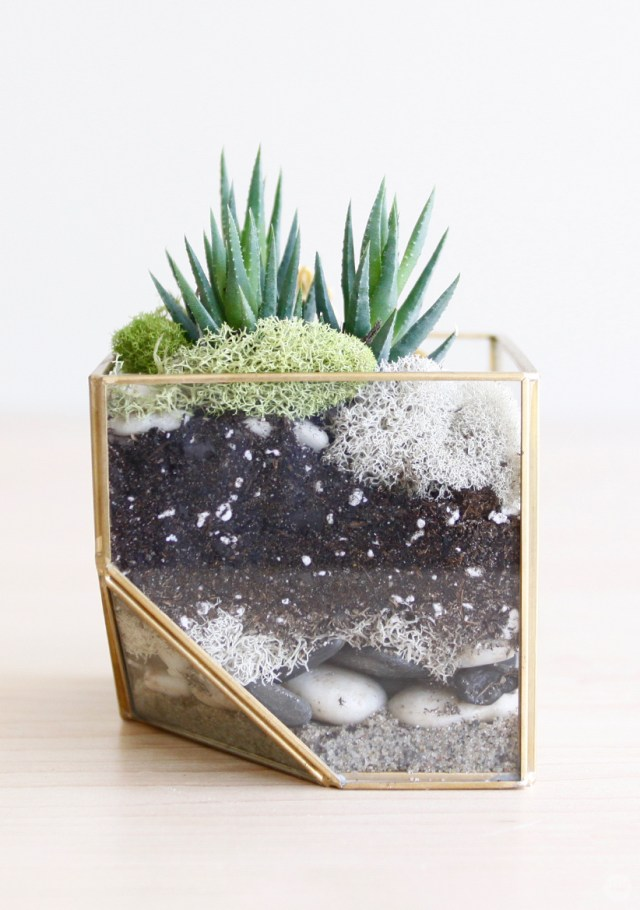 Golden jungle planter