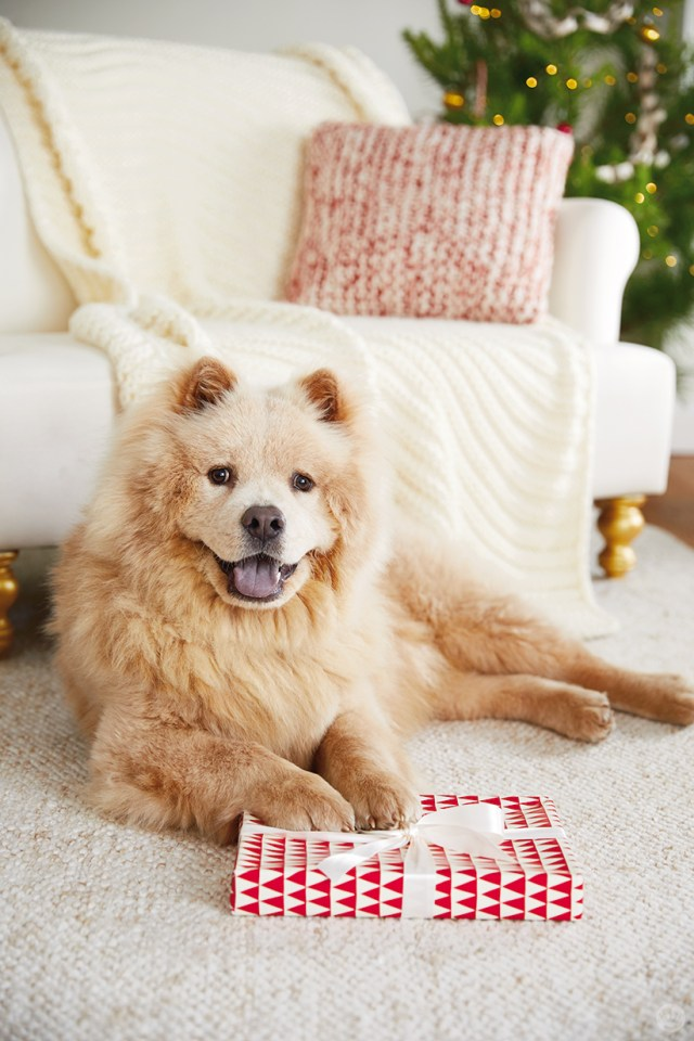 holiday pet photo ideas: dogs with presents