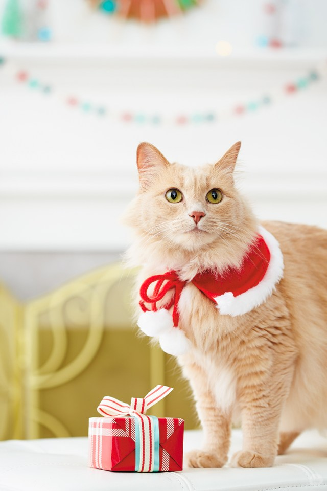 holiday pet photo ideas: pets in clothes