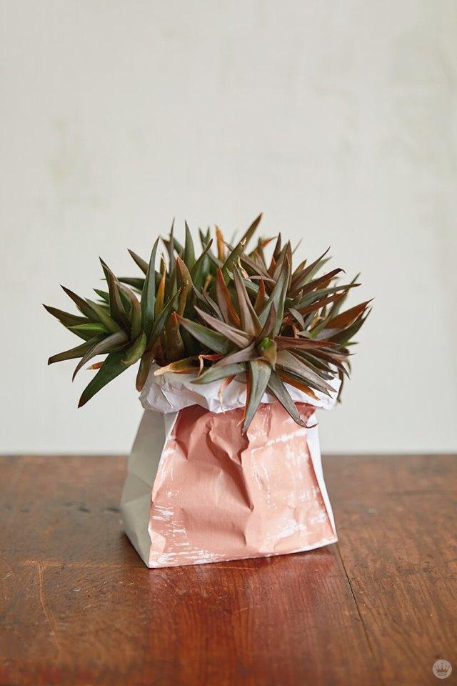 Un succulent dans un sac à plantes en papier bricolage peint en rose | thinkmakeshareblog.com