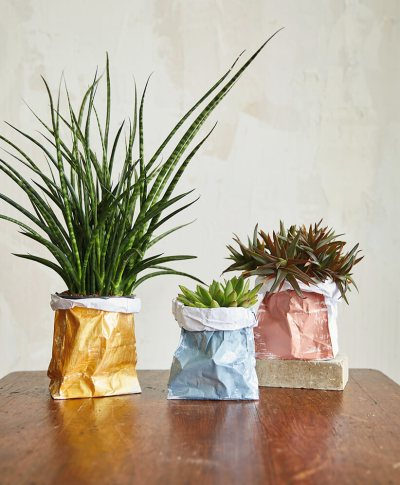 three house plants placed| in DIY Paper Planter Bags | thinkmakeshareblog.com