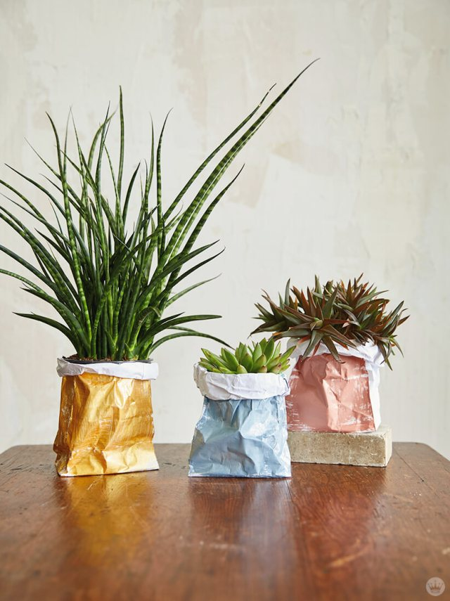 Three house plants placed in DIY Paper Plant Bags   thinkmakeshareblog.com